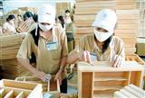 Giá gỗ tràm U Minh Hạ tăng mạnh